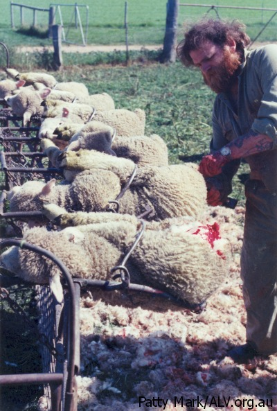 wool-facts-6