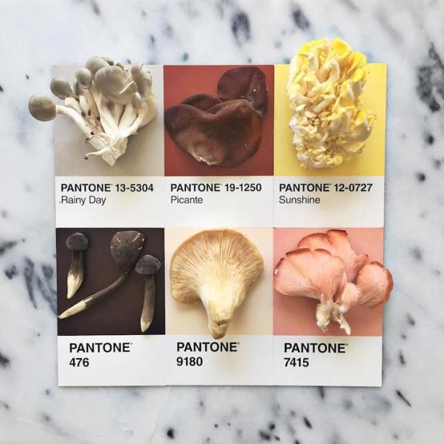 food-pantone-swatches-lucy-litman-11