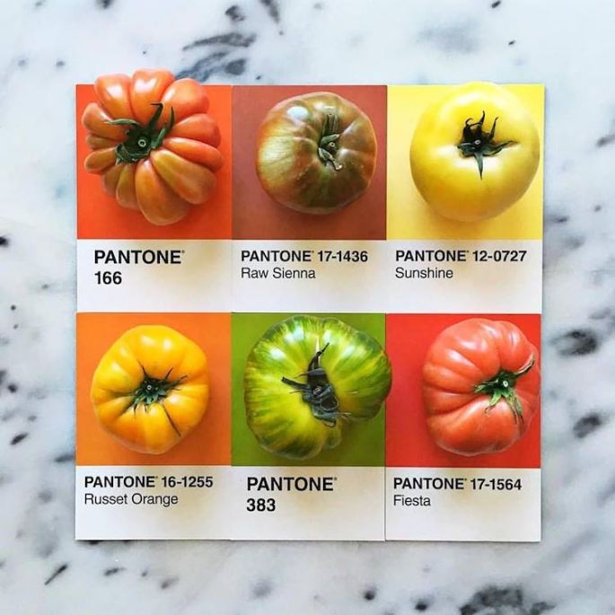 food-pantone-swatches-lucy-litman-5