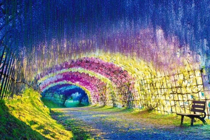 Il-tunnel-di-glicine-nella-città-giapponese-di-Kitakyushu-Collater.al_.jpg