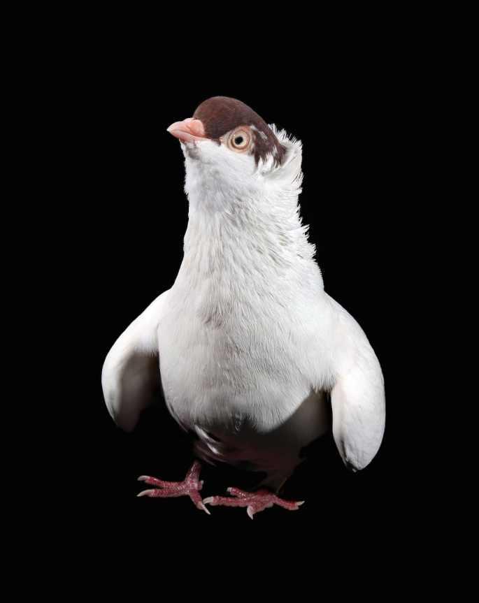 pigeon-photos-andrew-garn-11