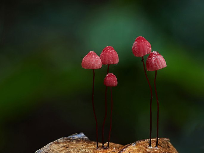 fungi-mushrooms-photography-steve-axford-22
