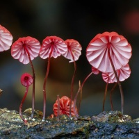 A Magical World of Mushroom Captured by Steve Axford